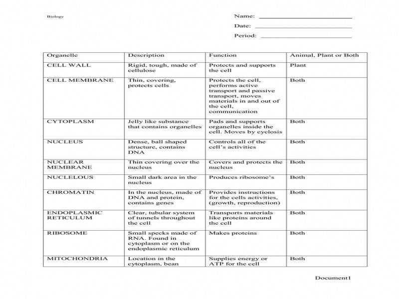 Download by size Handphone Tablet Desktop Original Size Back To Cell City Analogy Worksheet