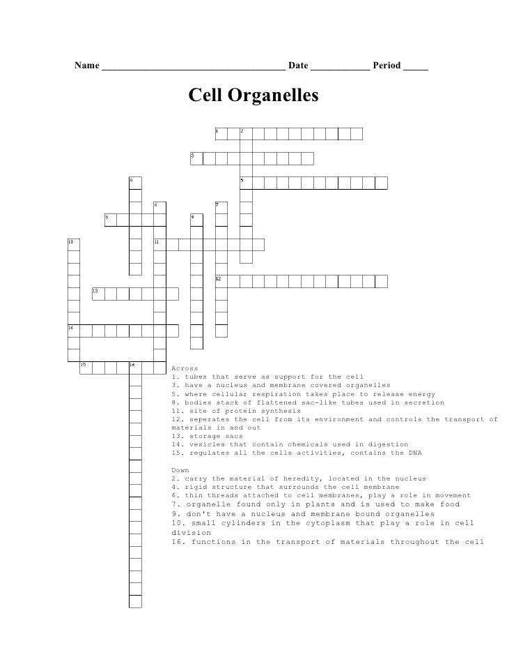 Biology Cell Organelle Crossword Puzzle Name