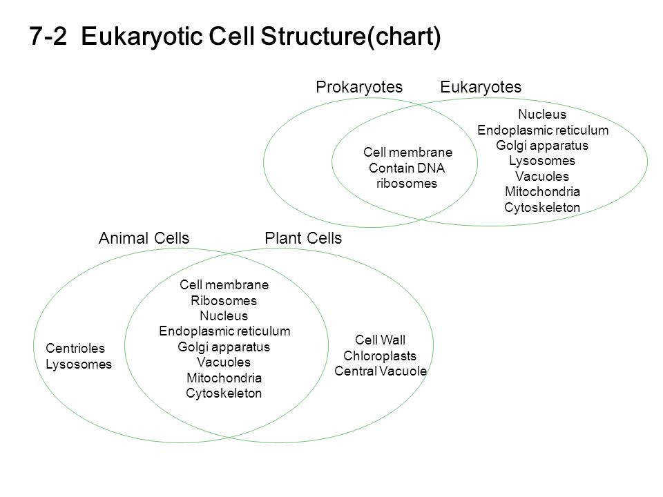 7 2 Eukaryotic Cell Structure chart