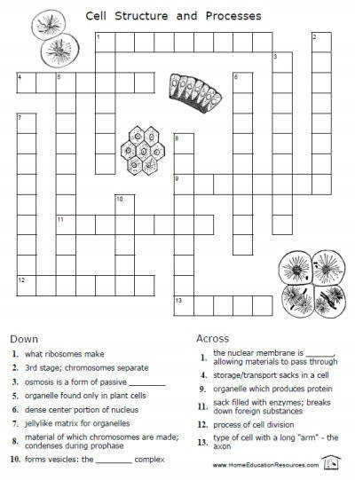 Cell Crossword Puzzle Answers Captures Cell Crossword Puzzle Answers Cellsworksheets2 shot