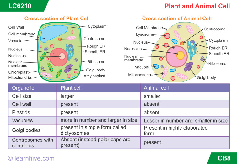 learning card for Plant and Animal Cell