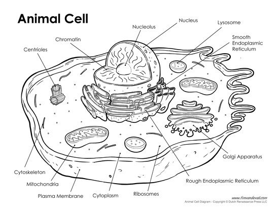 cell structure worksheet