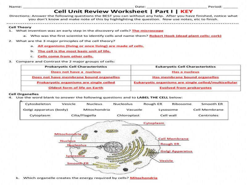 Cell Unit Review Worksheet Part I