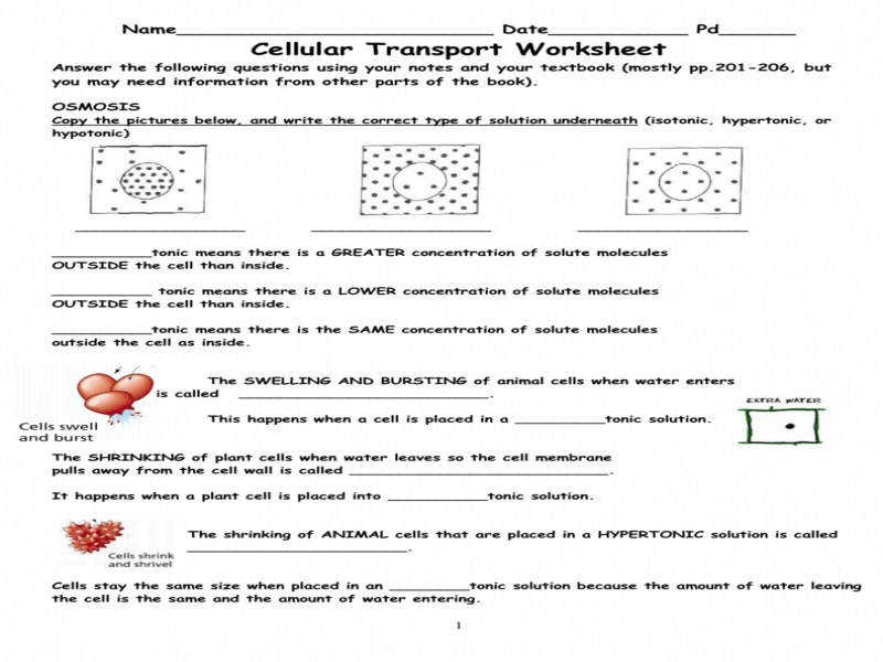 Cell Transport Worksheet Cellular Transport