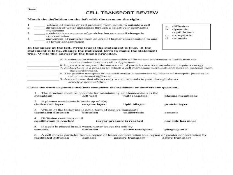 Cell Transport Worksheet Answers | Homeschooldressage.com