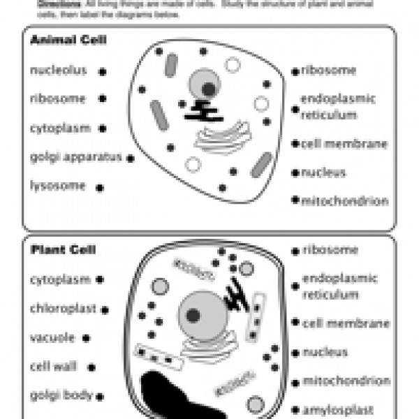 Animal and plant cells worksheet answers