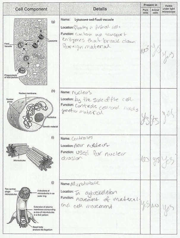 Cell Structures and Organelles Picture Picture