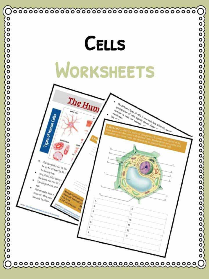Download the Cell Facts and Worksheets
