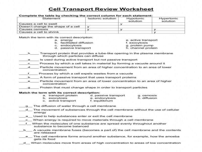Cellular Transport Worksheet Answer Key