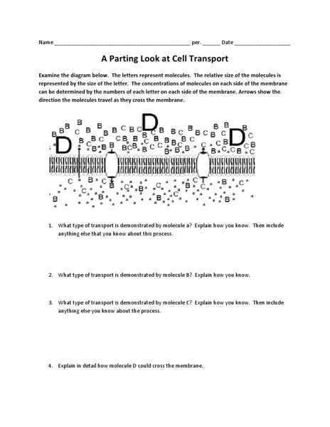 Cellular Transport Worksheet Section A Answers U2013 Worksheets