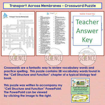 Cell Membrane Transport Crossword Osmosis Diffusion
