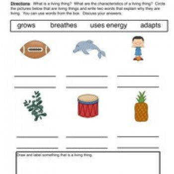 Characteristics Living Things Worksheet 1 Describe
