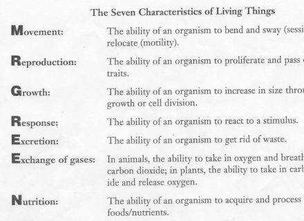 Characteristics Living Things Worksheet Also Worksheet Vs