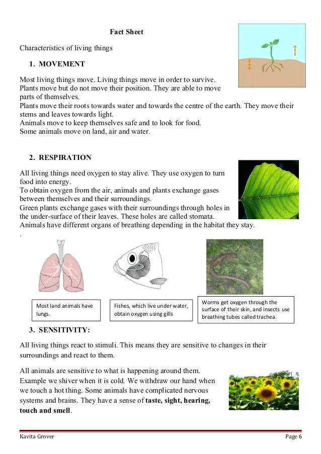 plants inside living room lesson plan and worksheets on characteristics of 6 page 5 fact