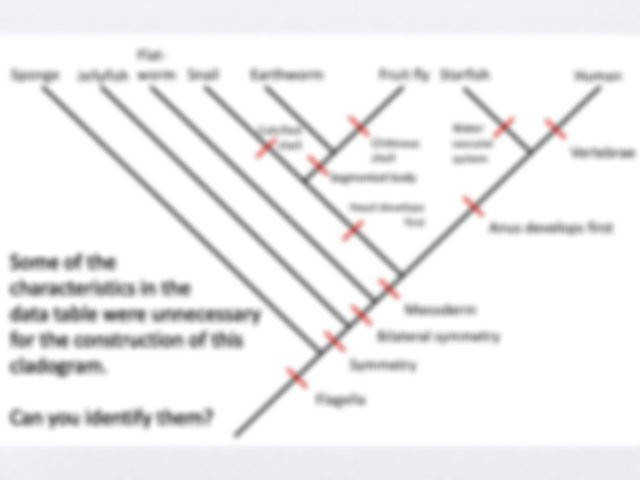 Cladogram worksheet answers indiana edu