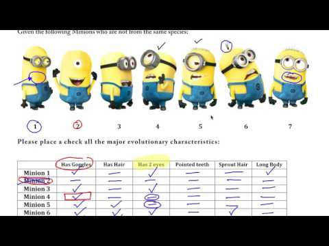 AP Biology Cladogram Practice with Minions