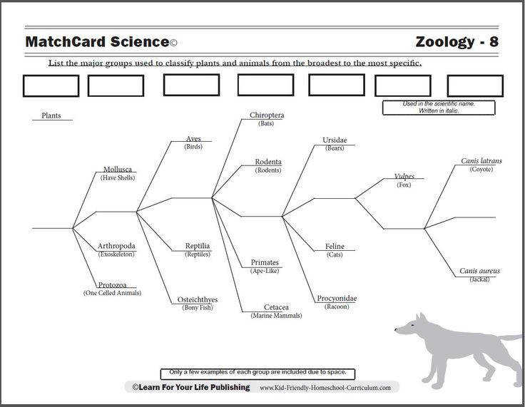 Lesson plan Kids use the example of dogs to learn the scientific classification system