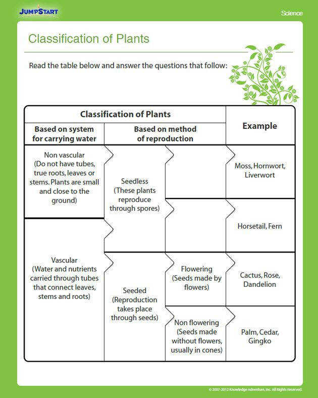 Classification of Plants – Printable Grade Science Worksheet