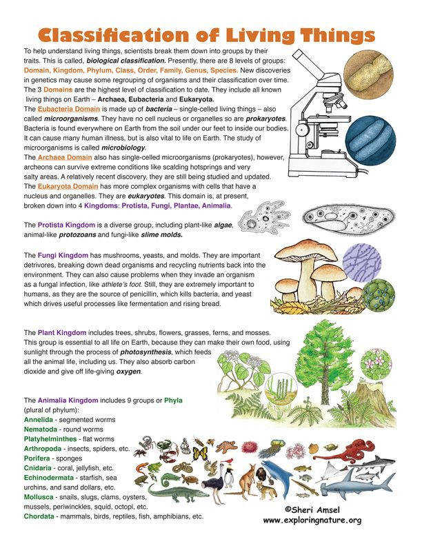 Classification of Living Things Find this on Exploringnature is a science for