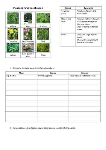 plant classification worksheet Google Search
