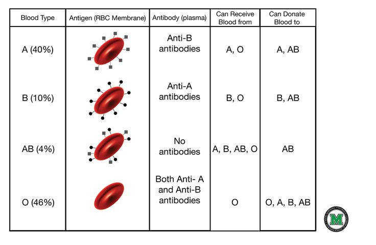 Printables Blood Typing Worksheet blood types and group on pinterest