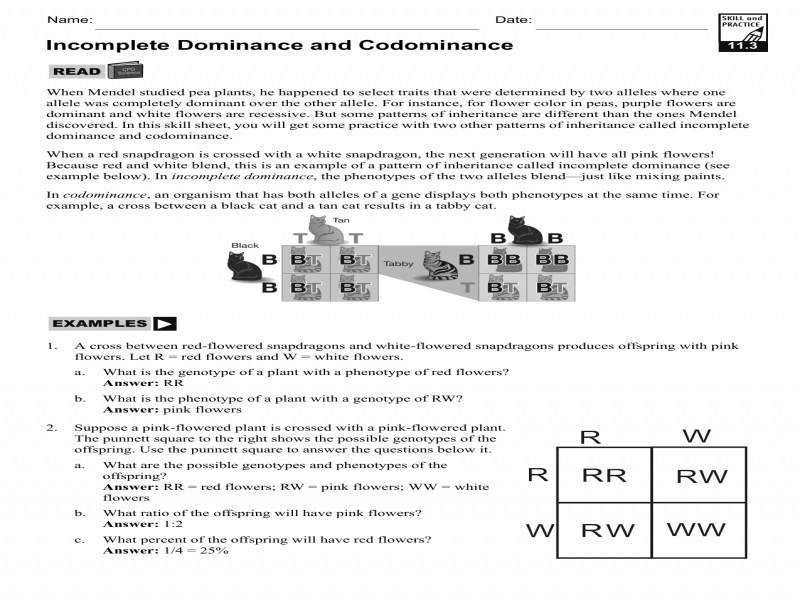 In plete Dominance And Codominance Worksheet Answers