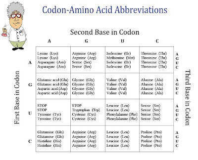 FREE Chart of Amino Acids and Codons
