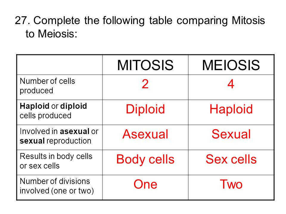 Comparing Mitosis and Meiosis Worksheet | Homeschooldressage.com