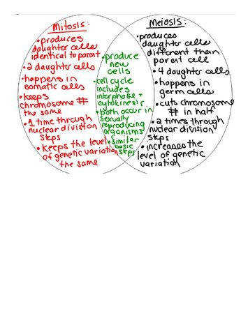 Mitosis and Meiosis Venn Diagram But could use to pare & contrast anything insect vs wind pollination
