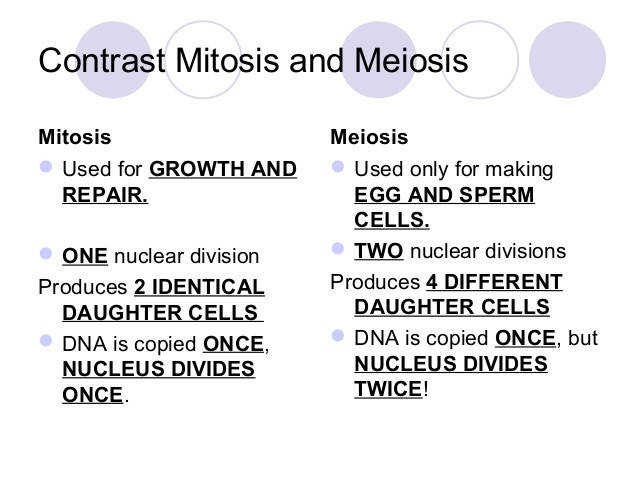 12 Contrast Mitosis and Meiosis