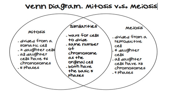 mitosis and meiosis worksheet laveyla