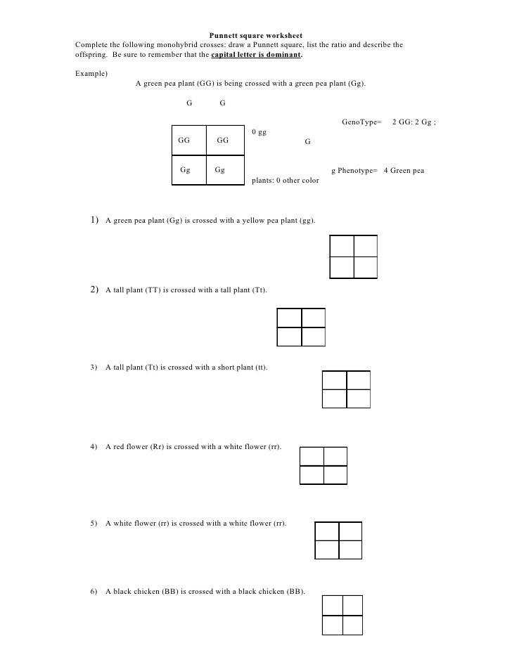 Punnett square worksheet plete the following monohybrid crosses draw a Punnett square