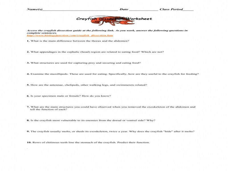 Crayfish Dissection Worksheet size 800 x 600 px source s3udylib