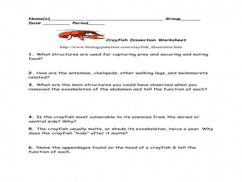 Crayfish Dissection Worksheet | Homeschooldressage.com
