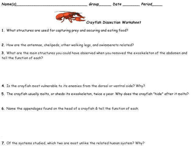 External Anatomy of the Crayfish Q worksheet w answer key