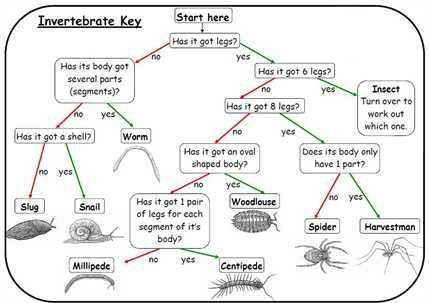 Dichotomous Key Worksheet | Homeschooldressage.com
