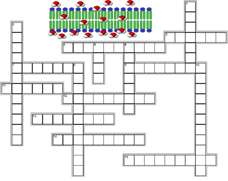 cell transport puzzle