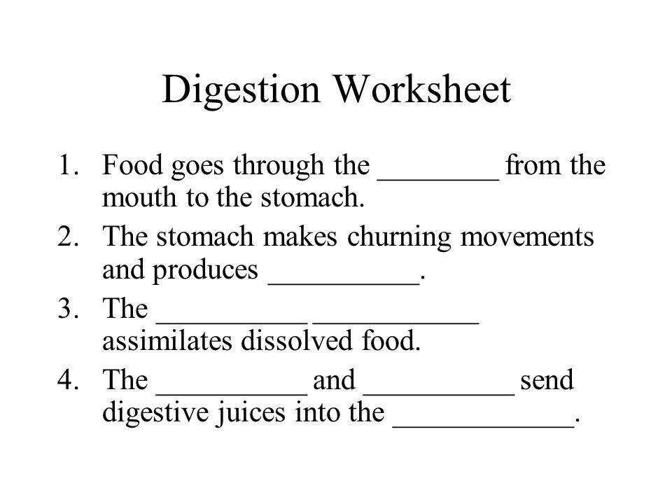 3 Digestion Worksheet