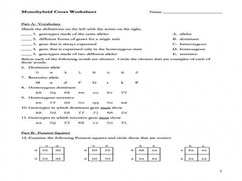 Monohybrid Cross Worksheet With Answers Worksheets – Guillermotull