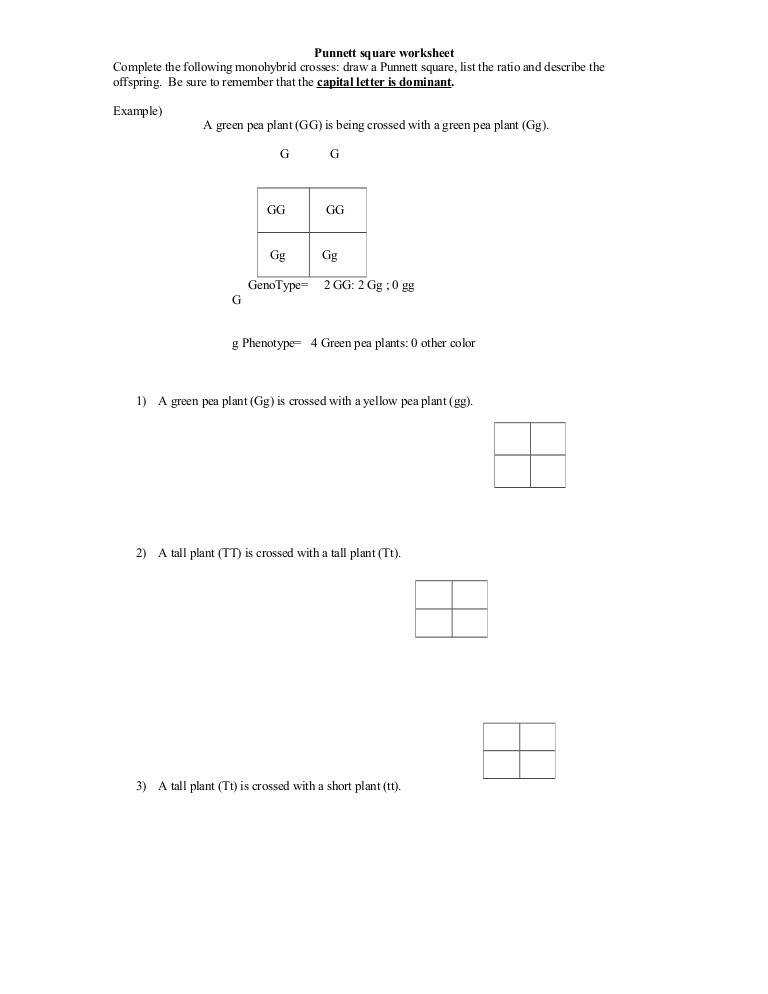 Worksheets Punnet Square Worksheet punnett square worksheet