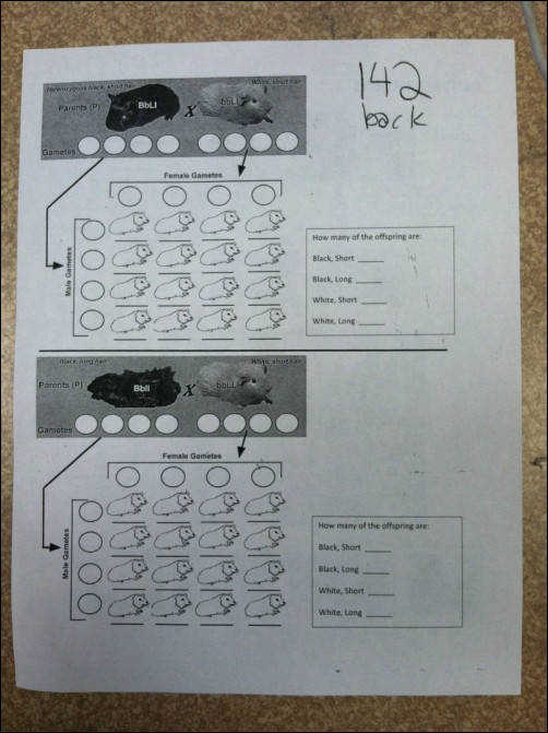 Dihybrid Cross Worksheet Answers Homeschooldressage Com