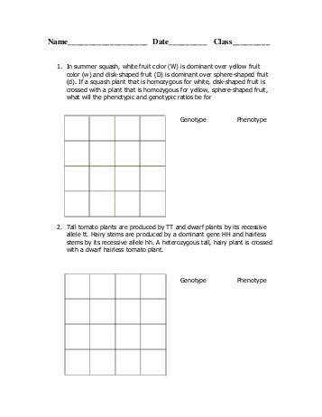 Dihybrid Cross Worksheet Answers | Homeschooldressage.com