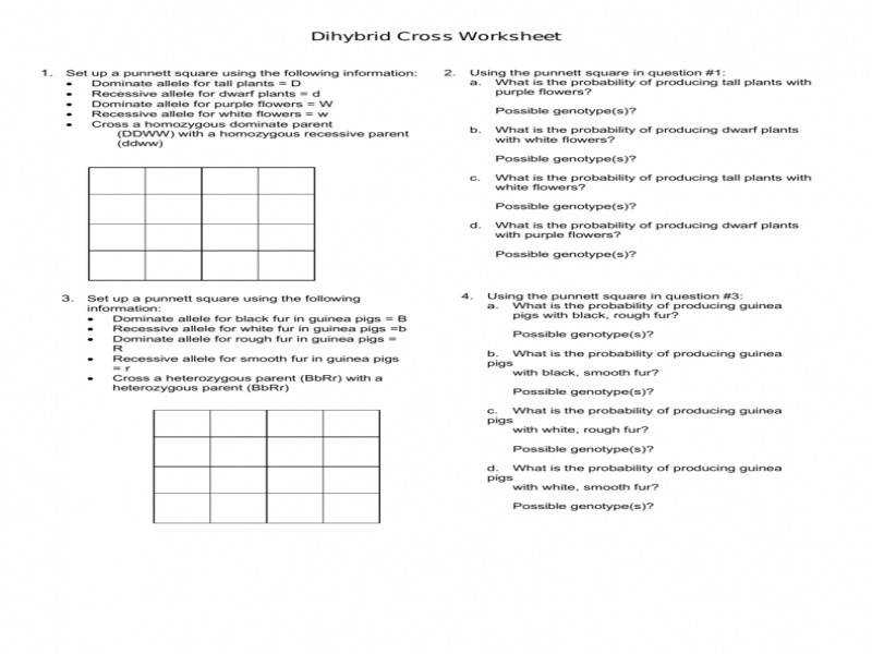Dihybrid Cross Worksheet | Homeschooldressage.com