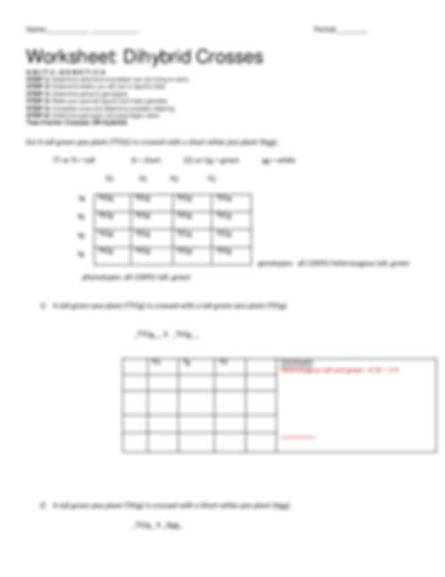 Dihybrid Cross Worksheet Homeschooldressage