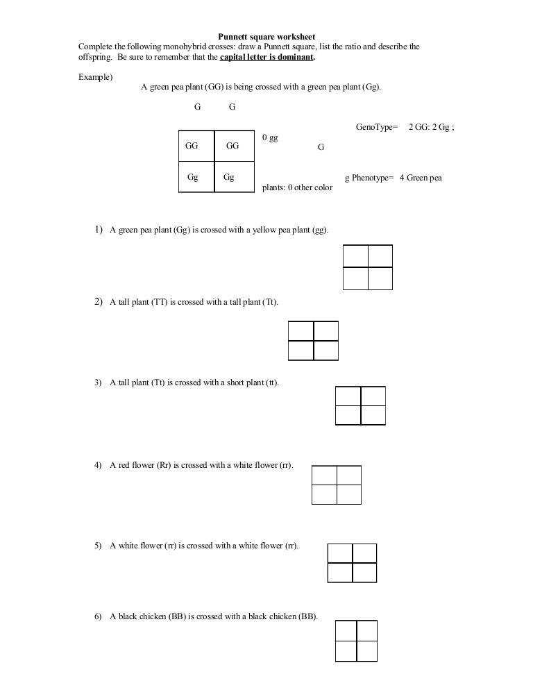 dihybrid crosses worksheet. Black Bedroom Furniture Sets. Home Design Ideas