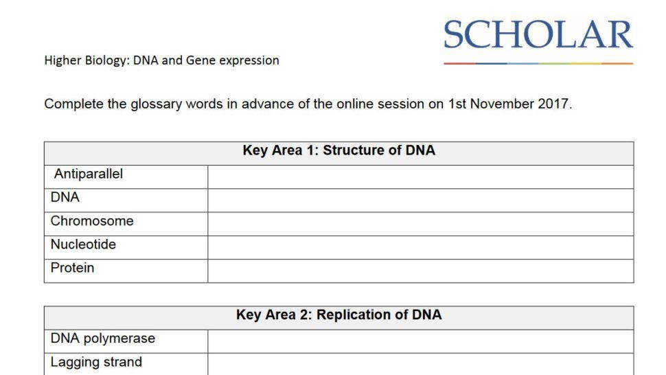 Dna Base Pairing Worksheet Homeschooldressage. Worksheet Dna The Molecule Heredity Replication What Is Sugar In Called Which. Worksheet. Gene Expression Worksheet At Clickcart.co