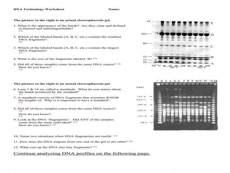 E Bio Worksheet Dna Fingerprinting Answers Proga Info