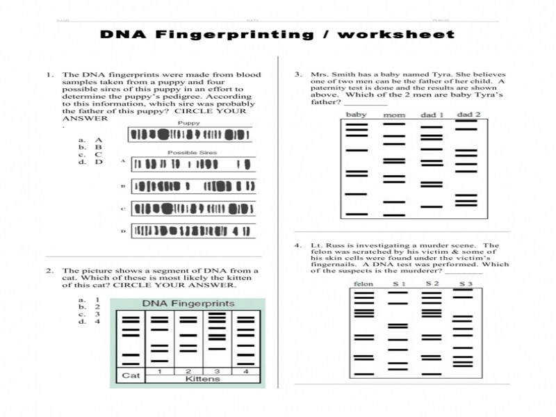 matching fingerprints worksheet the best and most comprehensive worksheets. Black Bedroom Furniture Sets. Home Design Ideas