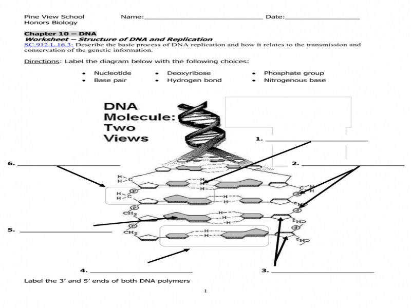 Dna Replication Worksheet Answers | Homeschooldressage.com