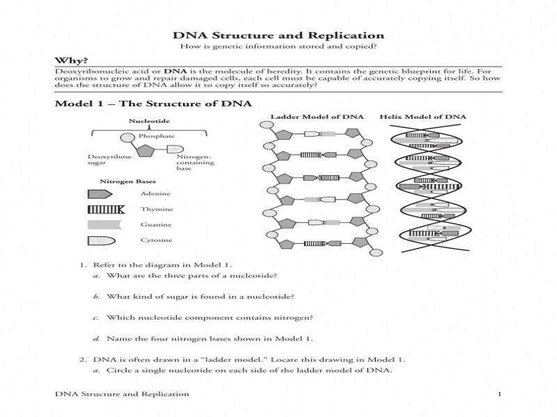 Dna Structure And Replication Why